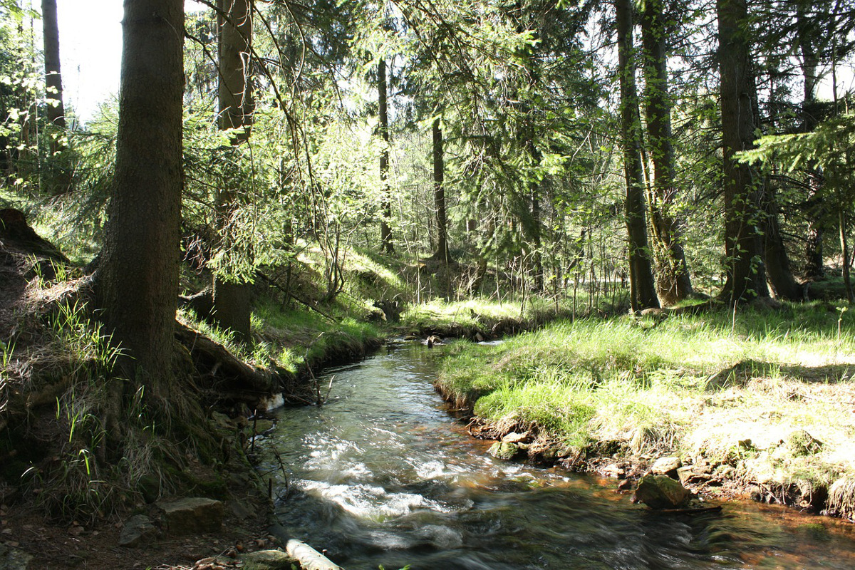 stream running through a meadow with trees alongside