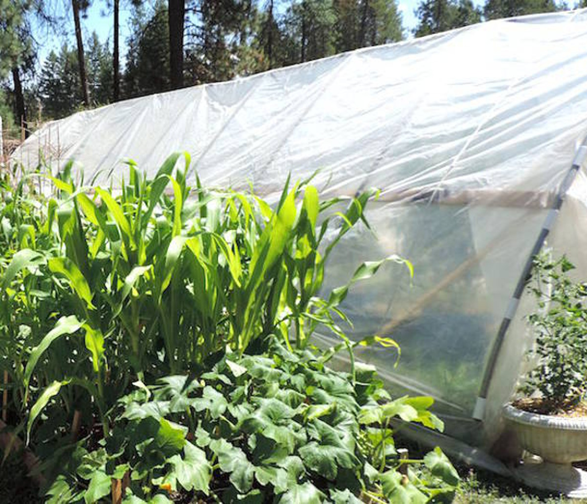 hoop house type greenhouse