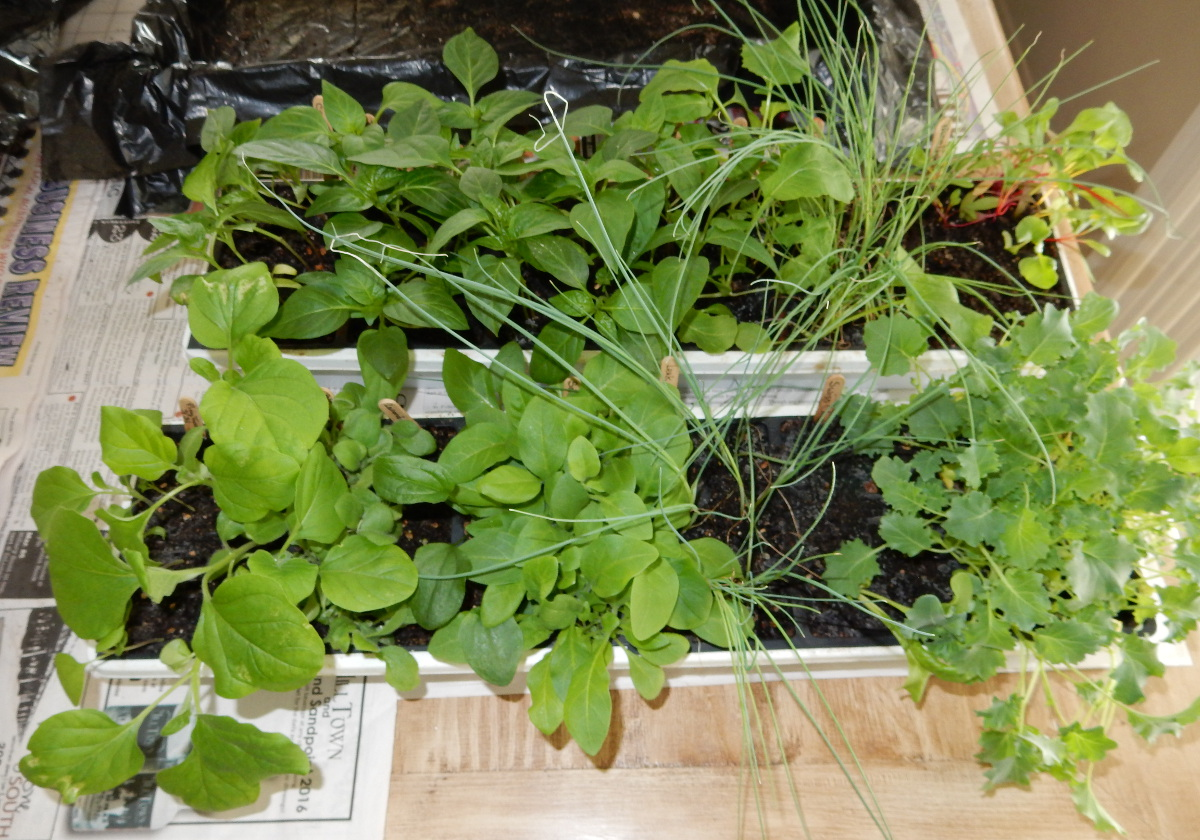 seedling plants