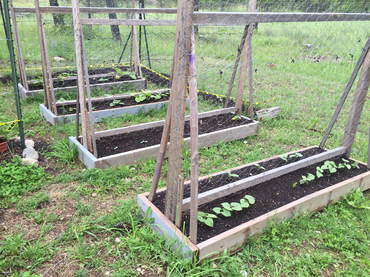 raised bed trellis's
