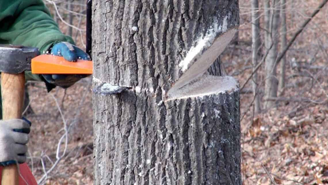 Cutting Down Trees (Safety, Cutting Firewood, Using