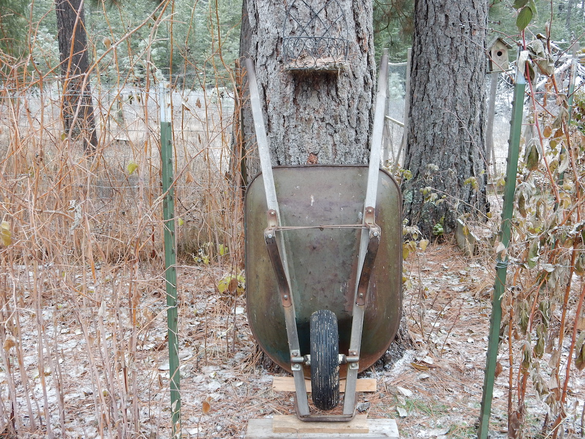 old wheelbarrow leaning up against a tree